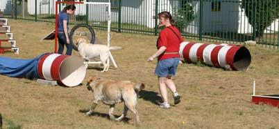 Dog Training Fourways